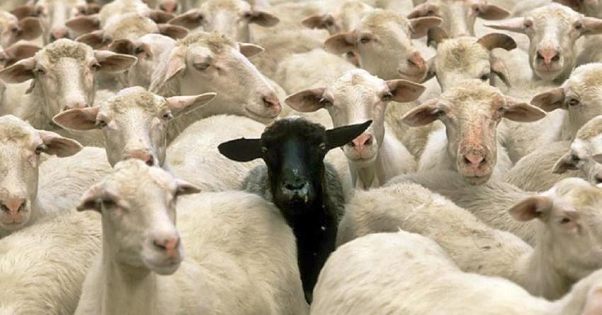As ovelhas negras do senso comum