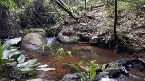 9 trilhas para fazer na cidade de São Paulo e arredores