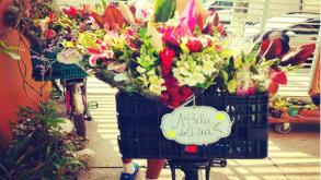 5 lugares para comprar plantas e se encantar em São Paulo