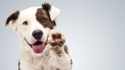 Feira de Adoção de Animais no Shopping Penha