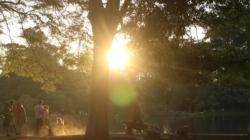 Parque Ibirapuera lança pesquisa online para melhorar seus serviços