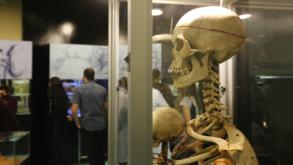 Museu de Anatomia Humana da USP é aberto para visitação