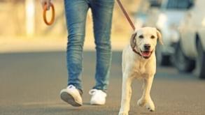 6 lugares para passear com o cachorro em São Paulo