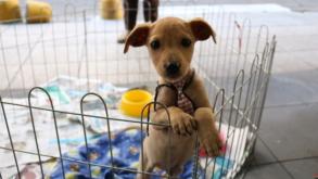 Estação Eucaliptos recebe feira de adoção de cães