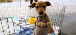 9 dicas para quem adotou um pet
