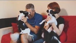 DogHero, o app que facilita a vida de donos de pets