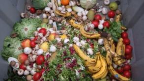 Aplicativo busca reduzir o desperdício de alimentos por meio de doações
