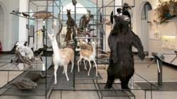 Museu de Zoologia de São Paulo inaugura tour virtual 360°