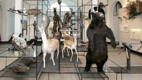 Museus da USP oferecem tour virtual e atividades online