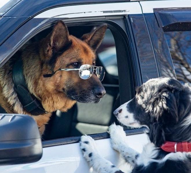 'Como cães e gatos 3: Peludos Unidos' no Alpha Cine Drive-In