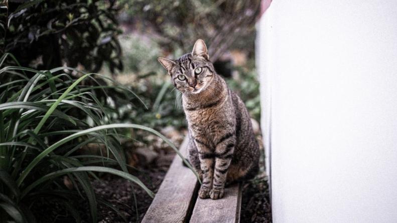 Para comemorar o Dia Mundial do Gato, PETZ oferece curso com expert em felinos
