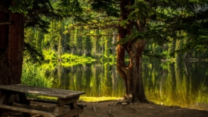 Um Dia no Parque 2021: evento de mobilização pelas Unidades de Conservação será on-line