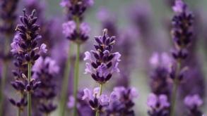 Horta das Flores está ameaçada na Mooca